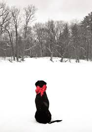 best 25 christmas card photo ideas with dog ideas on pinterest