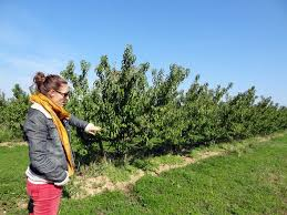 chambre d agriculture drome plateforme tab pour une approche systémique de l agriculture bio