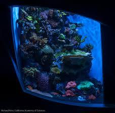 Aquascaping A Reef Tank Reef Aquarium Rock Wall Aquascapes Can Be Interesting U2013 Rich Ross