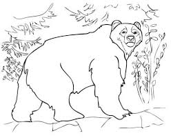 kodiak bear coloring free printable coloring pages