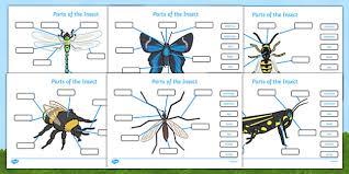 bee life cycle spin wheel life cycles visual aid minibeasts
