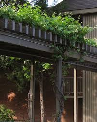 Trellis With Vines Plants For Water Conserving Landscapes
