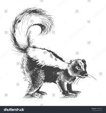 aggressive bad skunk hand drawn sketch stock vector 308239046