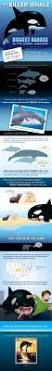 44 best whale facts images on pinterest whale facts whales and