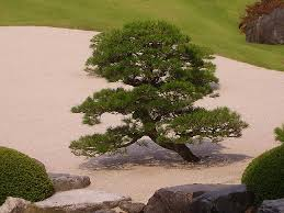 japanese garden in a small yard