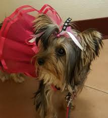 Veterinary Clinic Idaho Veterinary Internal The Pet Doctor Home Facebook