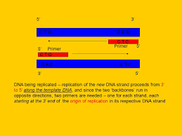 primers what is a primer primers are oligonucleotides small
