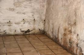 lutter contre l humidité dans une chambre comment lutter contre l humidité dans un logement le locat me