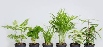 indoor plant how indoor plants can make you happier and healthier