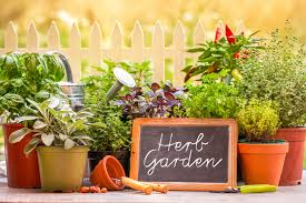 10 tips to start your first herb garden home u0026 living