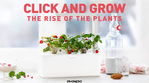 click and grow u2014 the rise of the plants 4k youtube