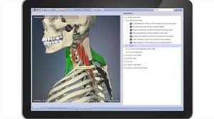Interactive 3d Anatomy Primal U0027s 3d Human Functional Anatomy Bring Functional Anatomy To