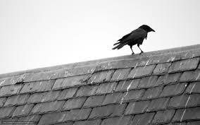 corbeau bureau tlcharger fond d ecran corbeau toit minimalisme fonds d ecran