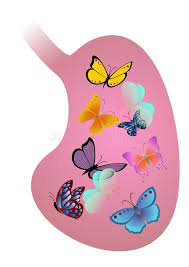 stomach with butterflies stock vector illustration of