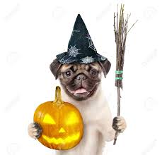 halloween white background dog in hat for halloween holding witches broom stick and pumpkin