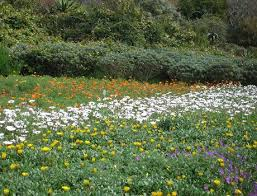 cape town wildflowers spring flowers and wildflower festivals 2017