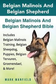 belgian malinois markings belgian malinois and belgian shepherd belgian malinois and