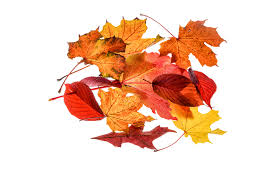 free photo autumn leaves leaf transparent free image