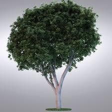 realistic trees 3d model best of 3d models