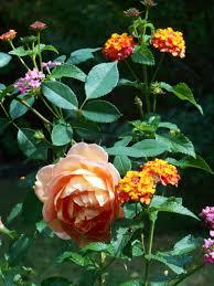 monarchs in the garden forest garden