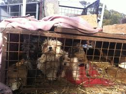backyard breeding do you know where your pet is at prisoners for