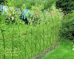 willow fedge buy living willow fedge screen wattle and twig