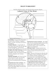 brain structures and functions worksheet k k club 2017