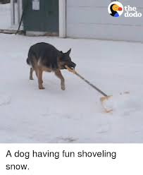 Shoveling Snow Meme - the dodo a dog having fun shoveling snow meme on me me