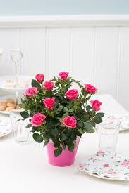 forever roses floradania marketing plants