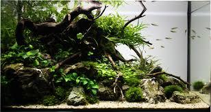 Aquascaping by Capa 2013 Roots U0026 Rocks Story 58 L 60x30x32 Lxlxh