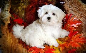 cute dog wallpapers cute dogs wallpaper 6329 1920 x 1200 wallpaperlayer com