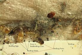 Bed Bugs On Mattress Bed Bug Bites