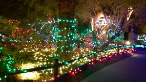 christmas lights at the zoo was such a fun time to visit picture