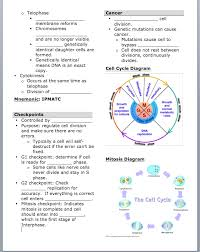 mitosis worksheet answers fts e info