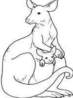 coloriage kangourou sur top coloriages coloriages kangourou
