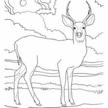 key deer coloring kids drawing coloring pages marisa