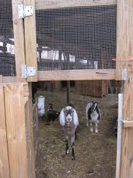 Closing The Barn Door by To Be Continued U2026 Ruffled Feathers And Spilled Milk