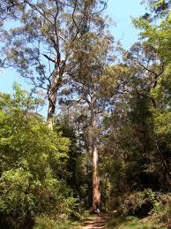 karri forest 4 day bibbulmun walking breaks bibbulmun track