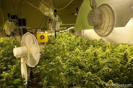 chambre de culture interieur la ventilation de la culture de cannabis du growshop alchimia