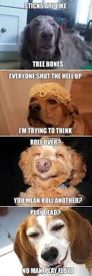 Stoned Dogs Meme - http static fjcdn com pictures new stoner dog i love