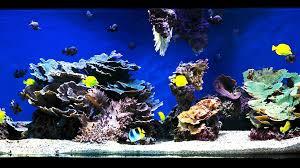 Live Rock Aquascaping Ideas How To Aquascape A Saltwater Aquarium Aquarium Care Youtube