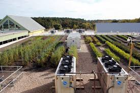 whole foods thanksgiving hours open greenroofs com projects whole foods market lynnfield ma
