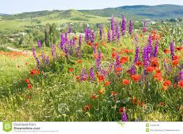 garden design garden design with summer landscape with field