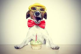 doggie birthday cakes b lovely events