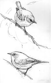 easy and beautiful birds sketches for beginners drawing of sketch