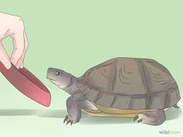 107 best turtles images on amphibians reptiles and