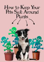 how to keep your pets safe around plants