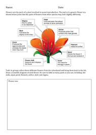 plant reproduction label the parts of a flower by dcollins42