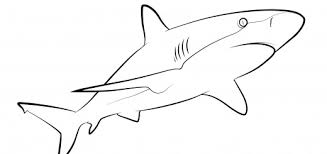 Free Printable Shark Coloring Pages 100 Images Page Of Pictures Coloring Pages Sharks Printable