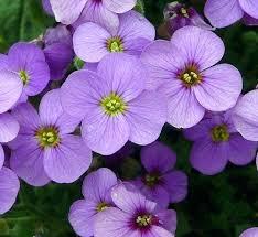 types of purple types of purple flowers unispa club